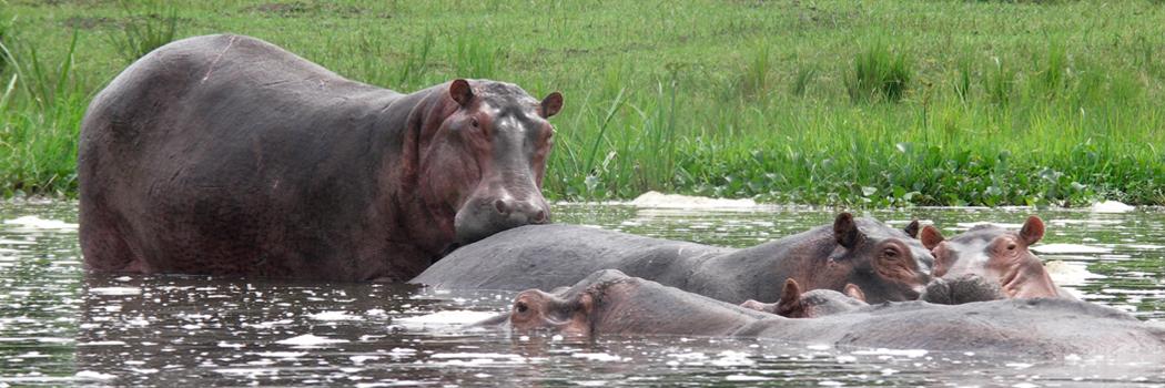 De vele rivieren van Oeganda zijn zeer indrukwekkend en een uitdaging